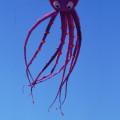 Octopus Gallery
