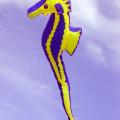 Seahorse Gallery
